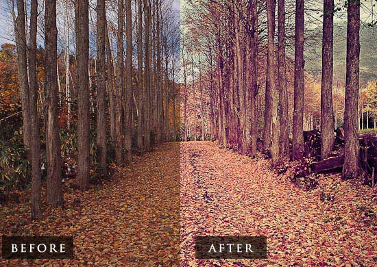 Download lightroom preset hangat